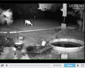 Florida Live Wildlife Camera